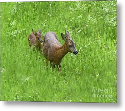 Roe Doe With Fawn Metal Print