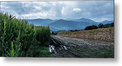 Rogue Valley Corn Metal Print by Mick Anderson