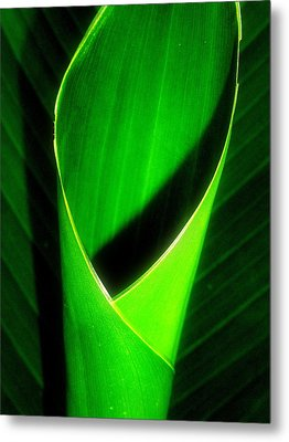 Rolled Canna Leaf Metal Print by Beth Akerman