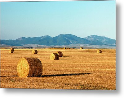 Rolled Gold Metal Print