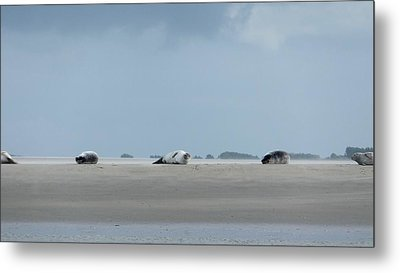 Metal Print featuring the photograph Rolling Seals by Marc Philippe Joly