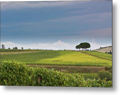 Rolling Tuscany 2 Metal Print by Patrick English