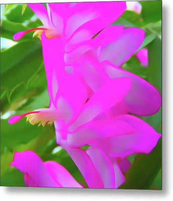 Metal Print featuring the photograph Romantic Skies Christmas Cactus Flower by Aimee L Maher Photography and Art Visit ALMGallerydotcom