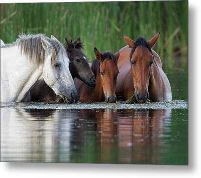 Room For All Metal Print by Sue Cullumber