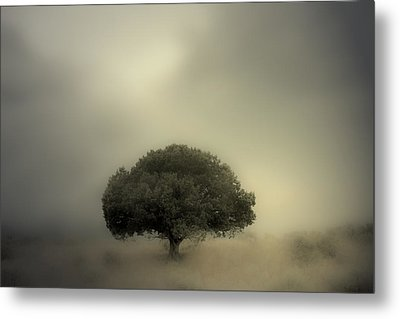 Room To Grow Metal Print by Mark  Ross