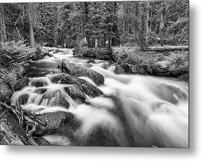 Roosevelt National Forest Stream In Black And White  Metal Print by James BO  Insogna