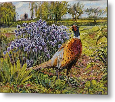 Rooster Pheasant In The Garden Metal Print by Steve Spencer
