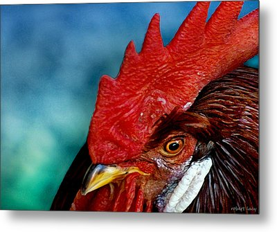 Rooster Metal Print by Robert Lacy