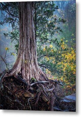 Rooted Metal Print by James Barber