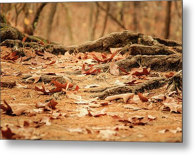 Roots Along The Path Metal Print by Joni Eskridge