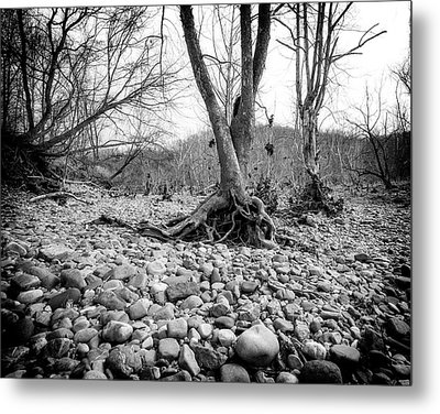 Metal Print featuring the photograph Roots And Stones by Alan Raasch