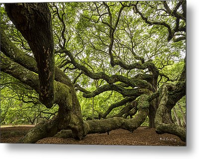 Roots Metal Print by Bill Cantey