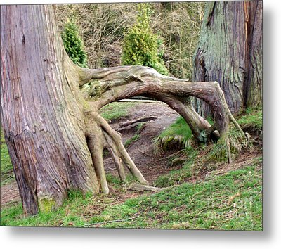 Roots Of Strength Metal Print