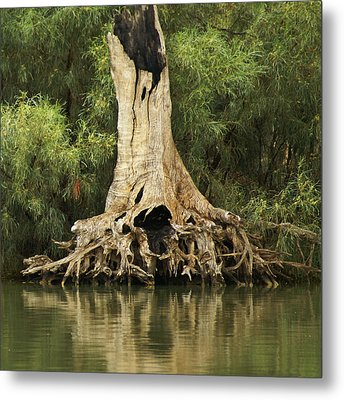 Roots Of Wisdom Metal Print by Holly Kempe