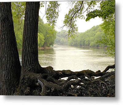 Roots On The Mississippi Metal Print by Jim Hughes