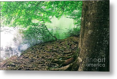 Roots On The River Metal Print by Rachel Hannah