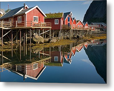 Rorbus With Reflections Metal Print by Aivar Mikko