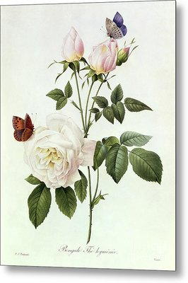 Rosa Bengale The Hymenes Metal Print by Pierre Joseph Redoute