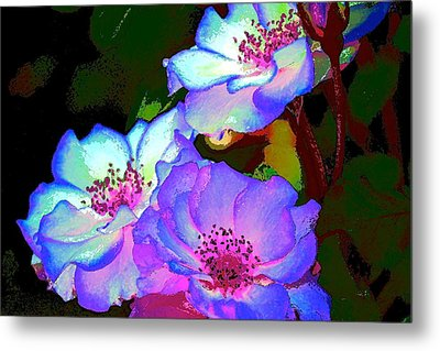 Rose 127 Metal Print by Pamela Cooper