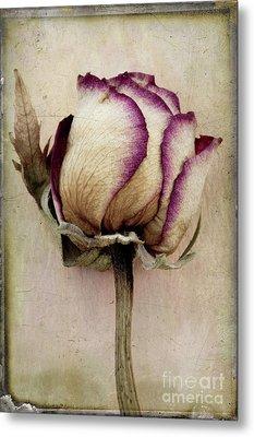 Rose 2 Metal Print by Marion Galt