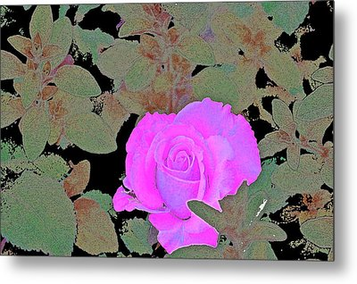 Rose 97 Metal Print by Pamela Cooper