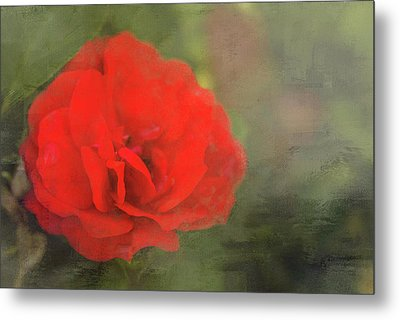 Red Rose Metal Print by Andrea Kappler