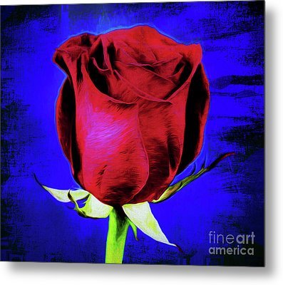 Rose - Beauty And Love  Metal Print by Ray Shrewsberry