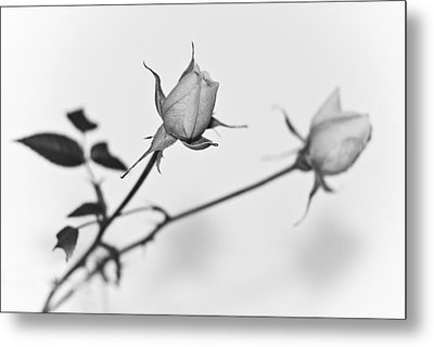 Rose Duo Metal Print by Ryan Kelly