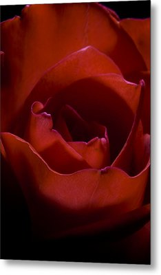 Metal Print featuring the photograph Rose by Gabor Pozsgai