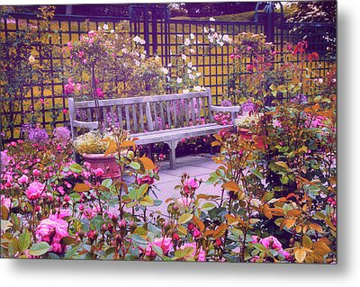 Rose Garden   Metal Print by Jessica Jenney