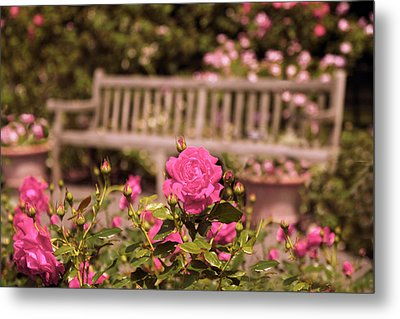 Rose Garden Rest Metal Print by Jessica Jenney