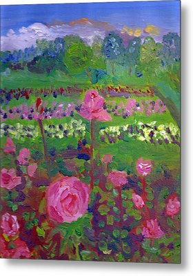 Rose Gardens In Minneapolis Metal Print