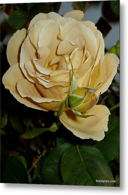 Rose In Ecru Metal Print by Lois Lepisto