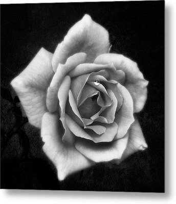 Rose In Mono. #flower #flowers Metal Print by John Edwards