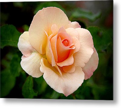 Rose Is A Rose Is A Rose Metal Print by Christine Till