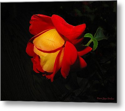Metal Print featuring the photograph Rose Of Fire by Joyce Dickens