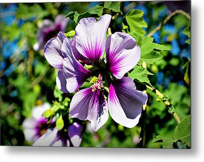 Rose Of Sharon - Blue Hibiscus Metal Print by Glenn McCarthy Art and Photography