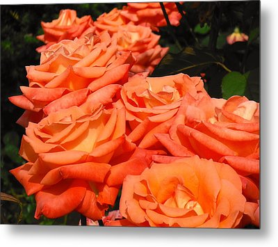 Rose Path Jubilee Metal Print