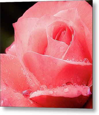Metal Print featuring the photograph Rose Petals And Drops Macro by Julie Palencia