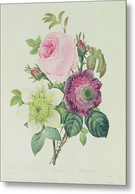 Rose Metal Print by Pierre Joseph Redoute