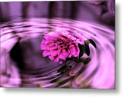 Rose Pool Metal Print by Kathleen Stephens