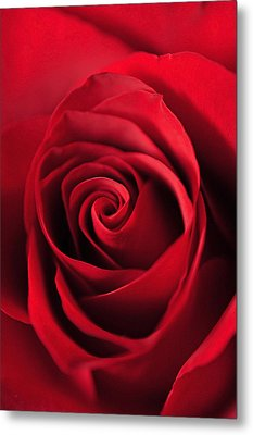 Rose Red Metal Print