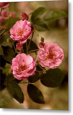 Rose Trio Metal Print by Jessica Jenney