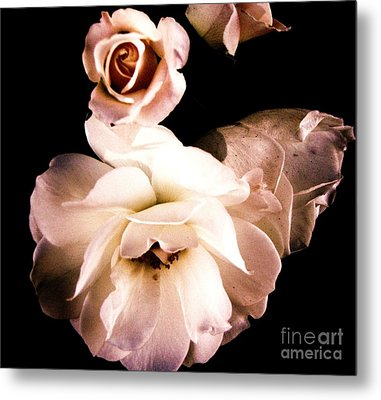 Metal Print featuring the photograph Rose by Vanessa Palomino