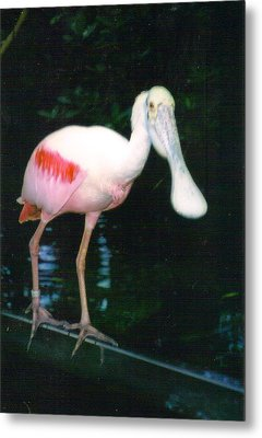 Roseate Spoonbill  Metal Print by Warren Thompson