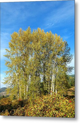 Rosehips And Cottonwoods Metal Print by Will Borden