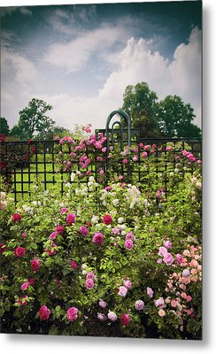 Roses Adorned Metal Print by Jessica Jenney