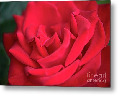 Roses Are Red Metal Print by David Zanzinger
