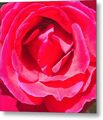 #roses Are #red ...#violets Are #blue Metal Print