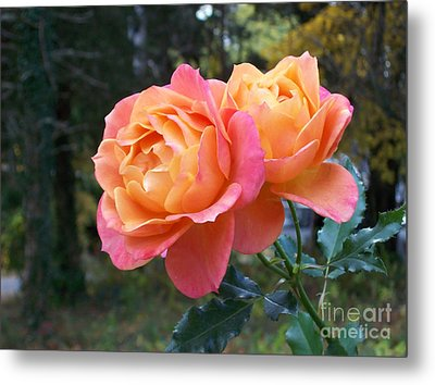Roses In The Woods Metal Print